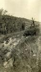 Former Emplacement near Belleau