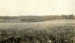 Battlefield at Bois d'Haumont