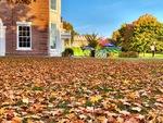 Leaves Around May Hall by Jennifer M. Macaulay