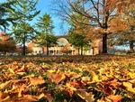 Leaves in Front of the Library by Jennifer M. Macaulay