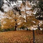 A Tree on the Hill by Jennifer M. Macaulay