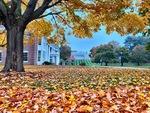 Fallen Leaves by Jennifer M. Macaulay