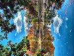 Clouds and Foliage over Pond by Jennifer M. Macaulay