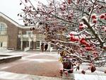 The First Snow by Jennifer M. Macaulay