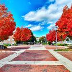 Fall Trees by Jennifer M. Macaulay