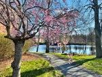Spring Pond by Jennifer M. Macaulay